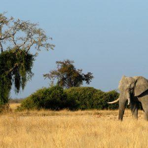 Botswana 9 daagse luxe safari.